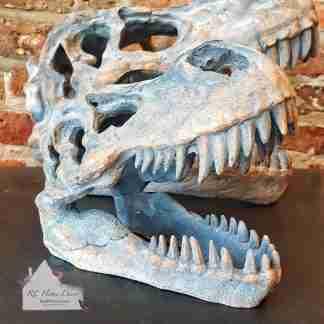 Small Dinosaur T - Rex Skull