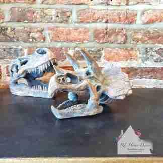 Small Dinosaur Triceratops Skull