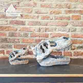 Dinosaur T - Rex Skull