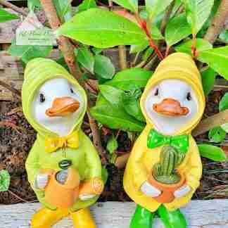 Gardening Dilly & Dally Ducks