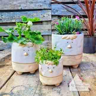Chicken Plant Pot Assortment