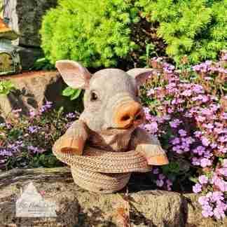 Pig In Straw Hat