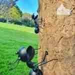 Metal Garden Large Ant