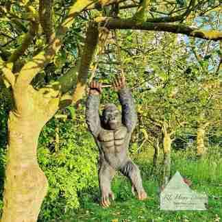 Hanging Gorilla